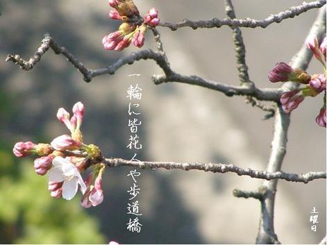 Photo_95
