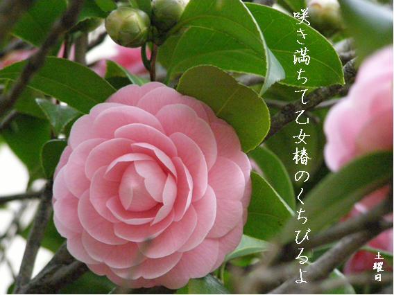 Photo_608