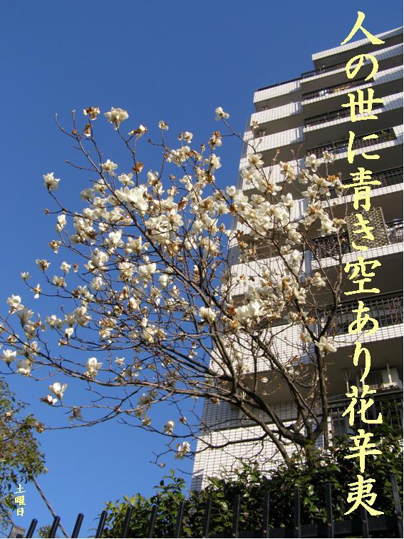 Photo_623