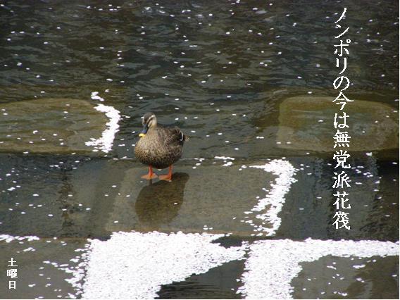 Photo_636