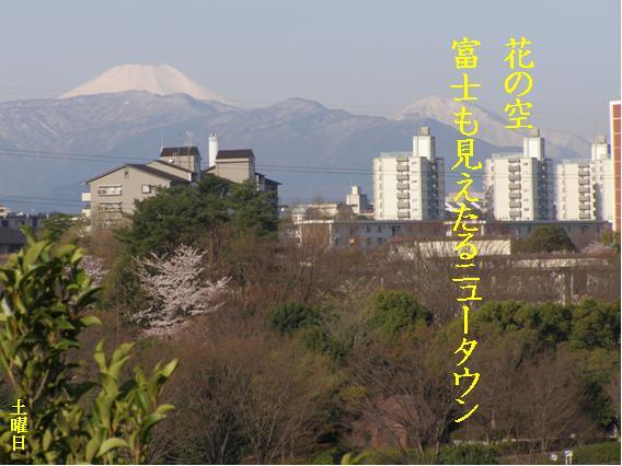 Photo_649