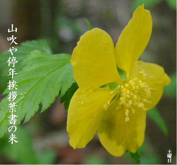 Photo_690