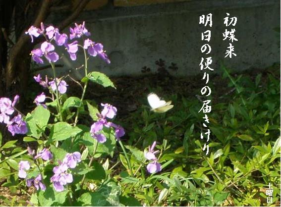 Photo_703