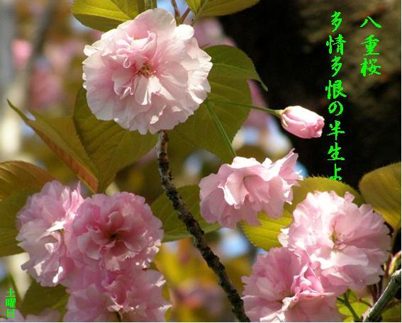 Photo_721