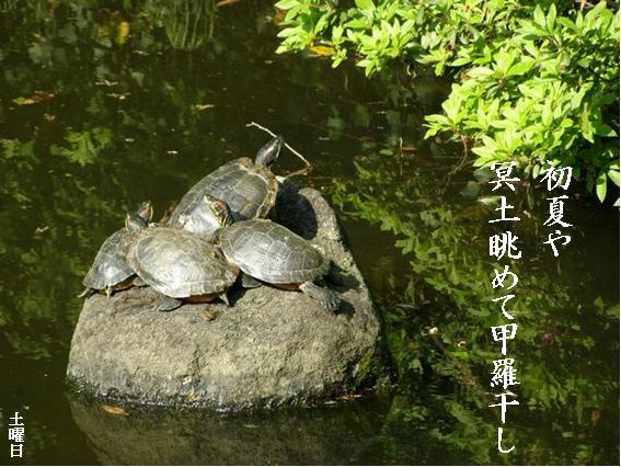 Photo_769