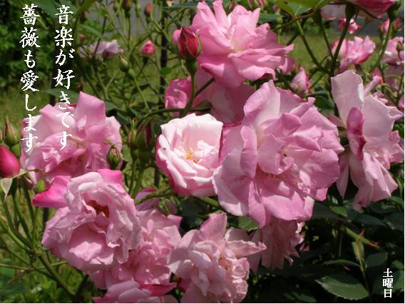 Photo_780