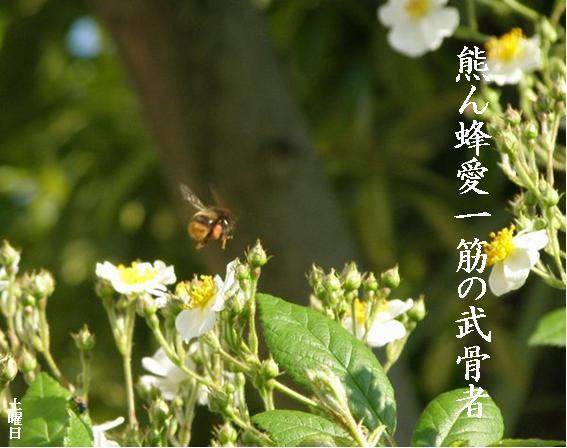Photo_785