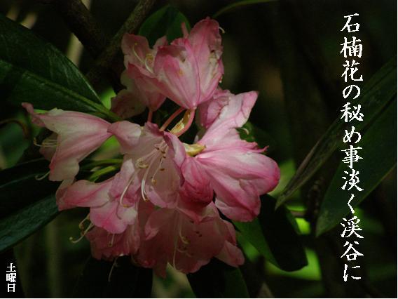Photo_814