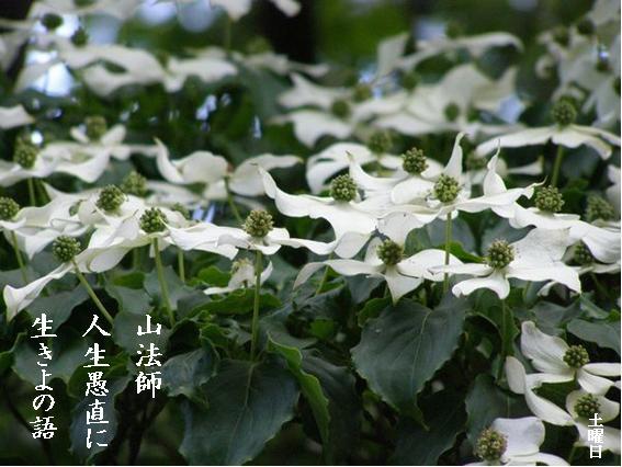 Photo_830
