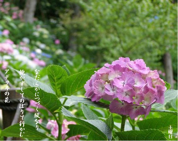 Photo_831