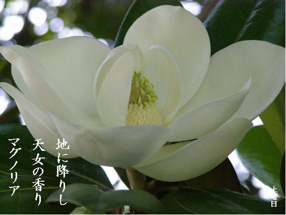 Photo_845