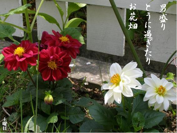 Photo_879